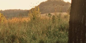 Andrew Bird - Noble Beast Album Review