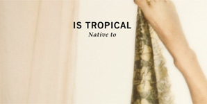 Is Tropical - Native To Album Review