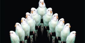 Ratatat - Neckbrace Single Review