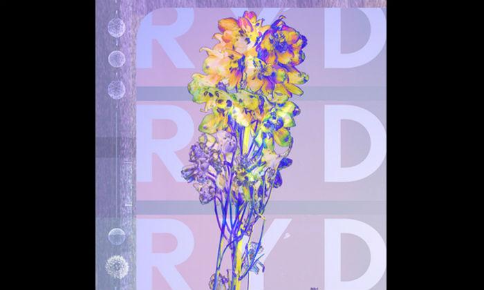 RYD RYD Album