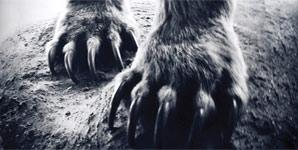 Shearwater - Animal Joy Album Review