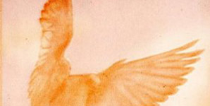 St Spirit - Pigeon