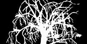 Story One - Out Of Season