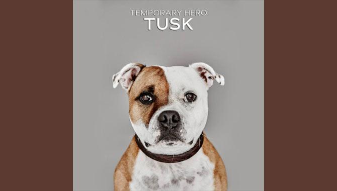Temporary Hero Tusk Album