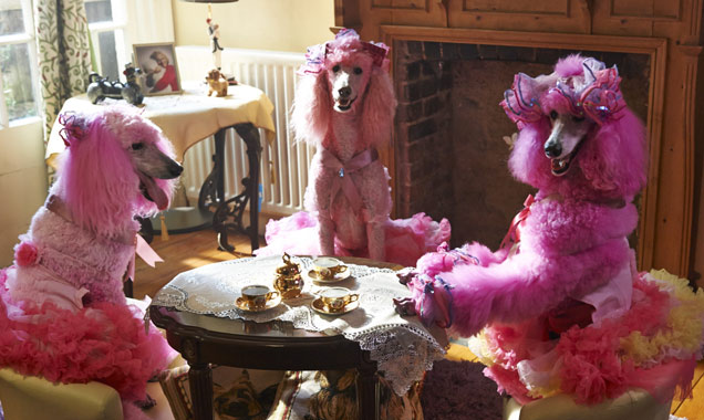 Pudsey The Dog Movie 4 Poodles