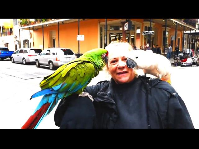 Beans On Toast - New Orleans Honeymoon Video