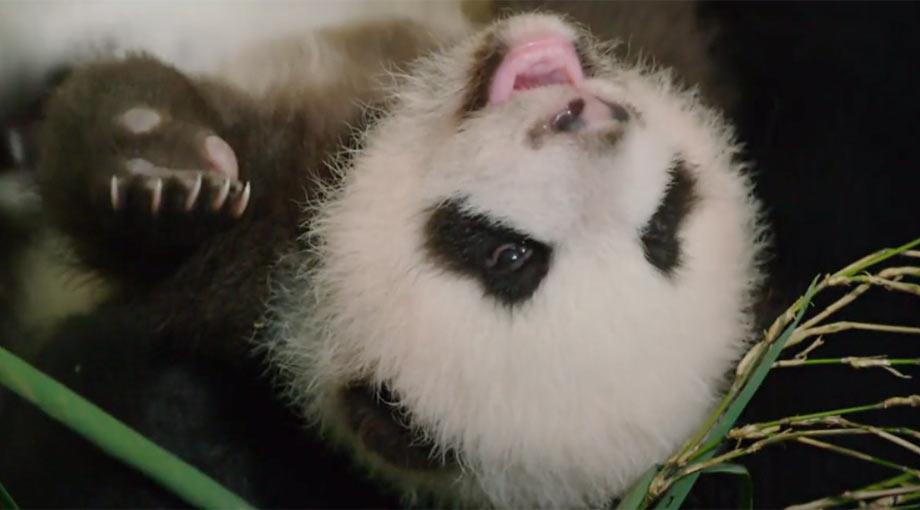 Born In China Trailer