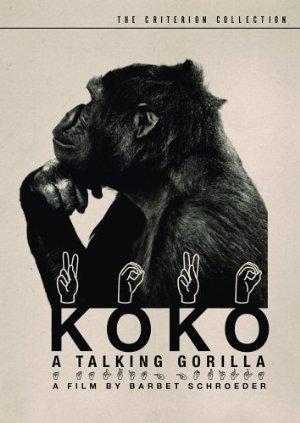 Koko, a Talking Gorilla