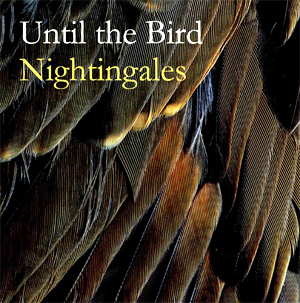 Until The Bird Announces New Single 'Nightingales' Out March 3rd 2014 From Upcoming Album 'Pale Clouded Yellow'