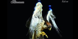 The Courteeners Falcon Album