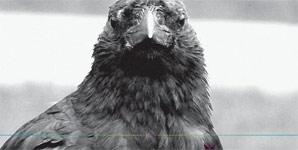 Os Mutantes Haih Or Amortecedor Album