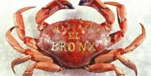 Mariachi el Bronx Mariachi El Bronx Album