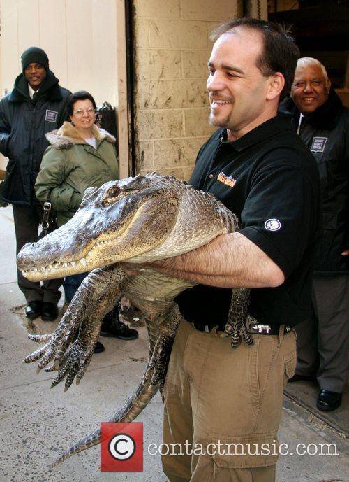 Augie The Alligator 5