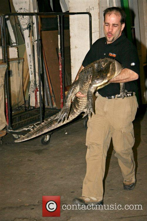 Augie The Alligator 1