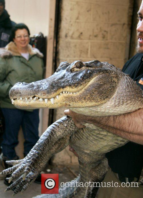 Augie The Alligator 4