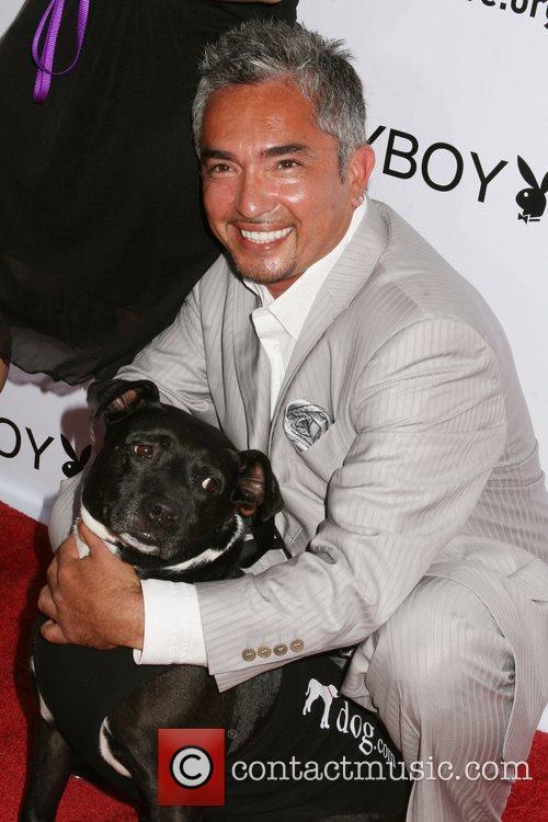 Cesar Millan Much Love's Bow Wow Wow Animal...