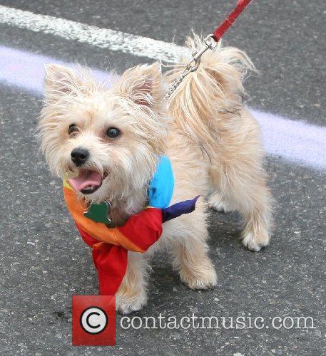Gay Dog 38th Annual LGBT Gay Pride March...