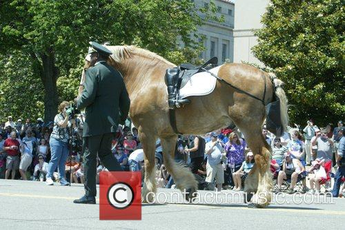 Riderless horse Annual Memorial Day Parade on Constitution...