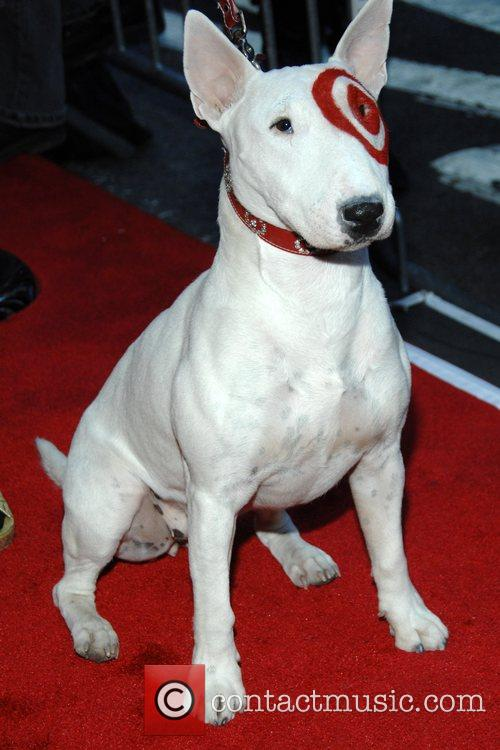 target dog breed. target dog. Target Dog and Fox