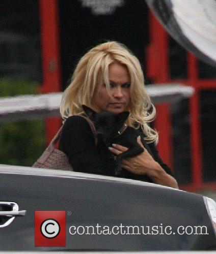 Boarding a private plane with her dog in...