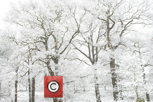 Snow falls in Richmond park in the spring...