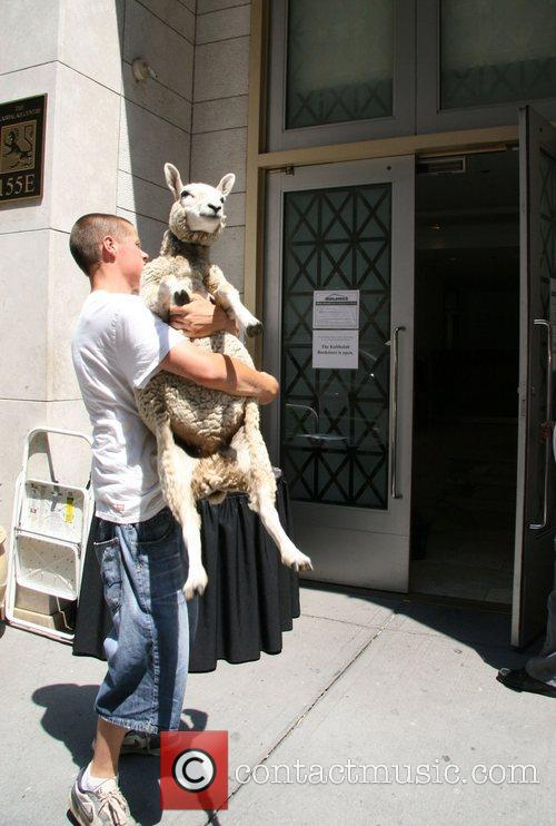 Animal being carried into the Kabbalah Centre New...