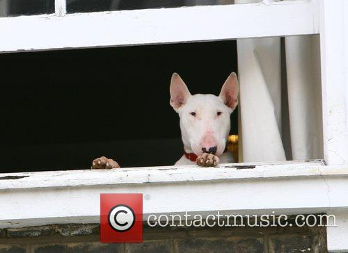 Lily Allen's dog Maggie May watches out of...