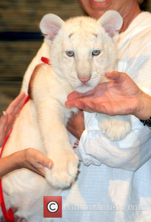 Celestial Siegfried and Roy announce the winning names...