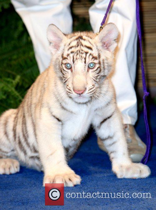 Siegfried and Roy announce the winning names of...
