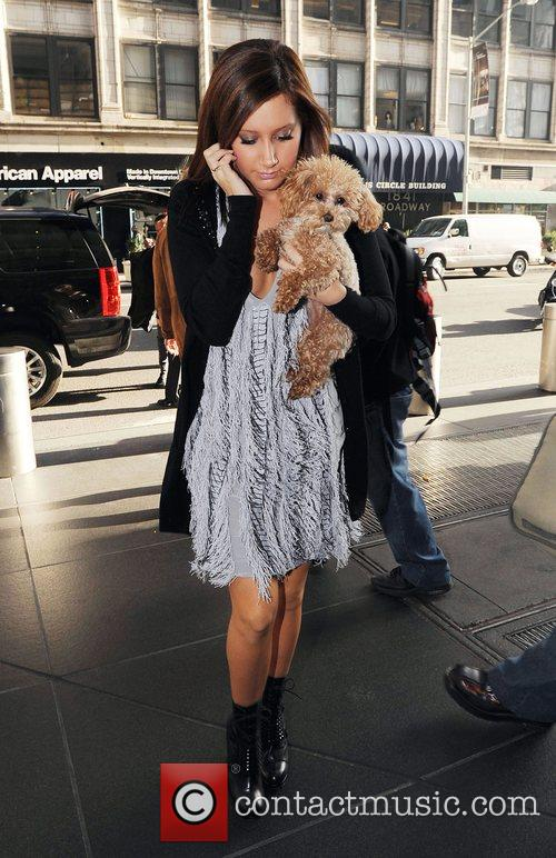 Ashley Tisdale carrying her dog while out and...