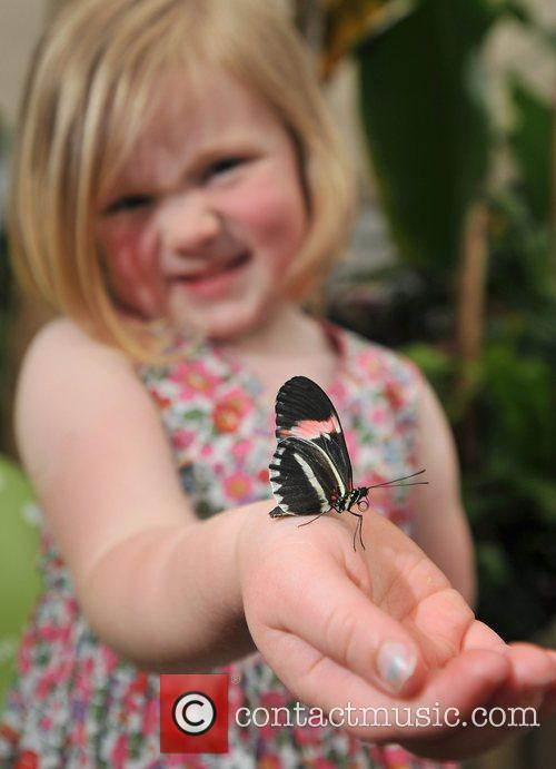 Opening of the new Butterfly Jungle exhibition at...