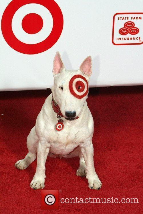 Bull Eyez The Target Dog The 2009 Billboard...