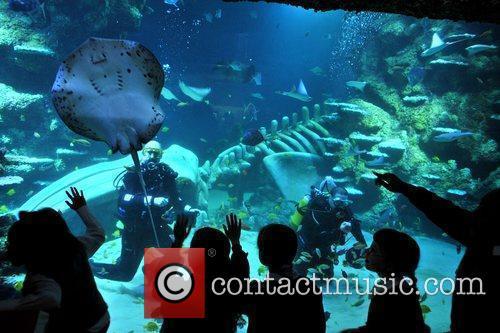 The new multi-million pound London Sea-Life is revealed...