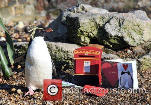 London Zoo - photocall Roxy the penguin prepares...