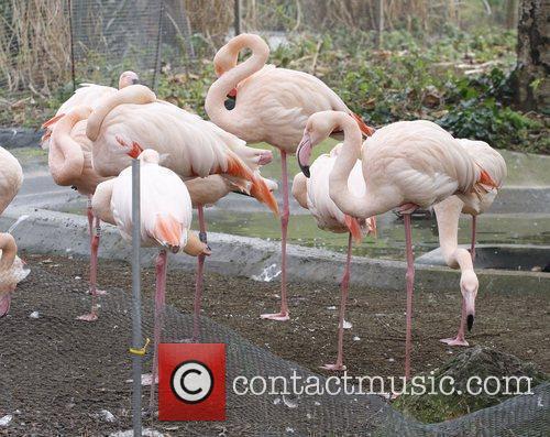 The annual London Zoo stock take