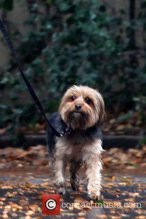 Natalie Portman's dog Natalie Portman walking her dog...