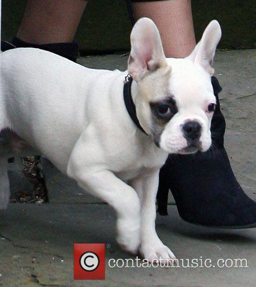 Sarah Harding's dog Corker London, England