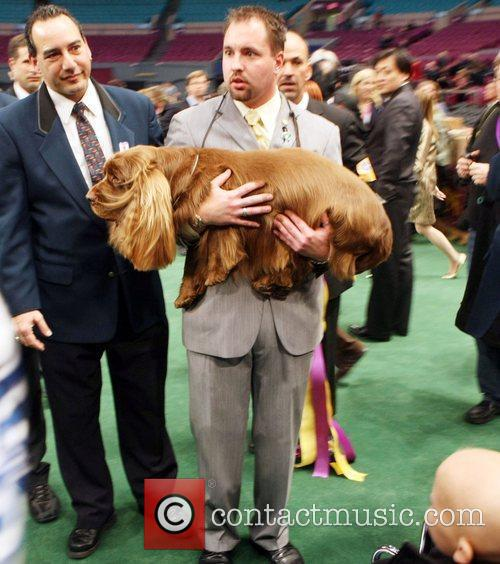 The 133rd Westminister Annual All Breed Dog Show Finals 2