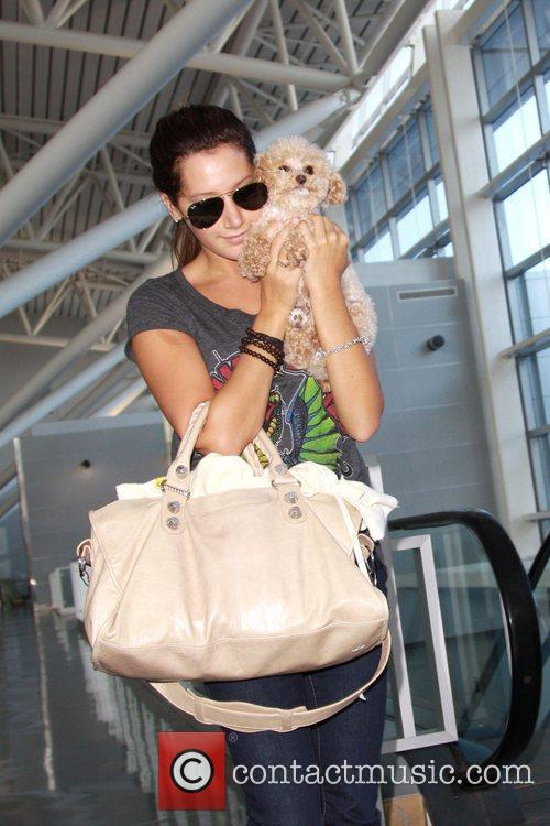 Ashley Tisdale and Her Dog Maui 6