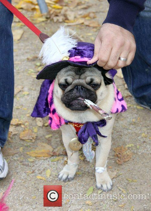 Dog dressed as a Smoking Dog at the...