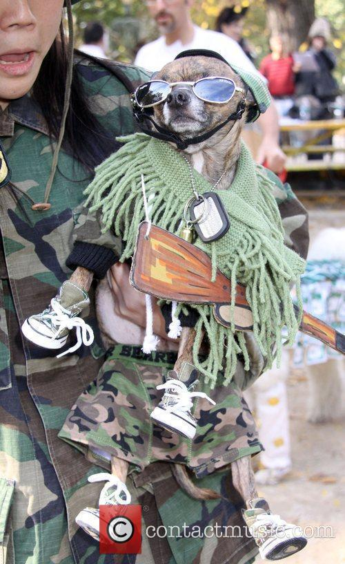 Dog dressed as a Soldier at the 19th...