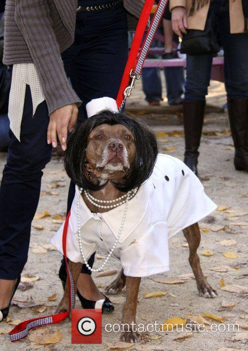 At the 19th Annual Topkins Square Halloween Dog...