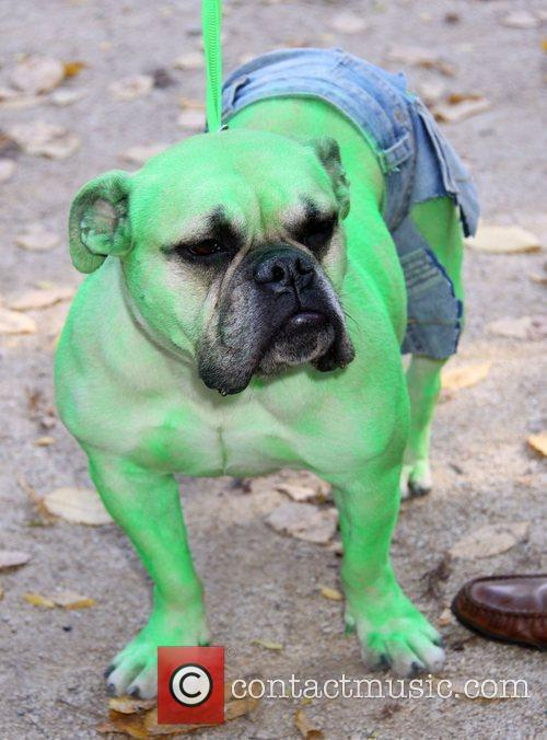 Dog dressed as the Incredible Hulk at the...