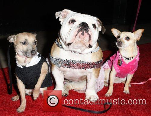 The opening night of 'Legally Blonde' the musical...