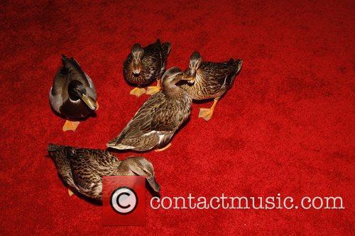 Memphis Peabody Ducks Opening Night of the Broadway...