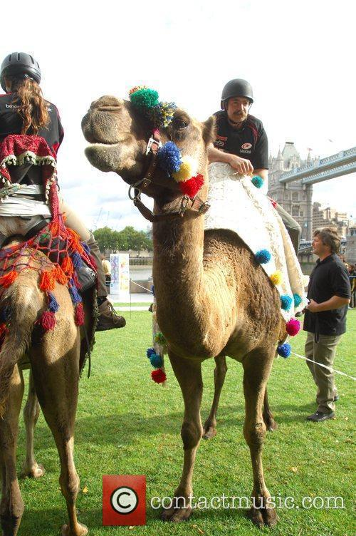 Saracens Rugby Club Hosts A Camel Race In Potters Fields Park 7