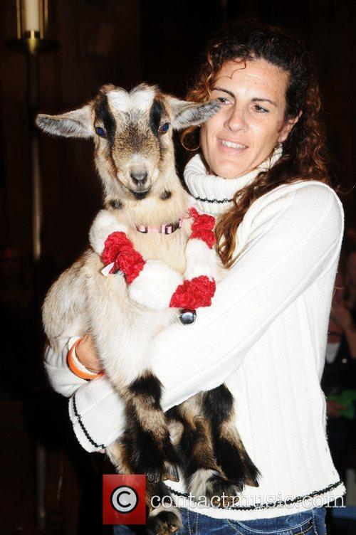 Goat being blessed  Cindy Adams hosts New...