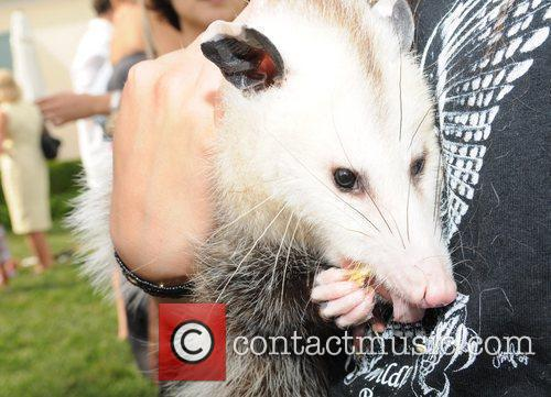 Beth Ostrosky Stern  with a rescued Possum...