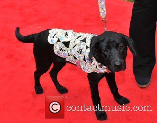 Dog wearing a Vivienne Westwood design Cats &...