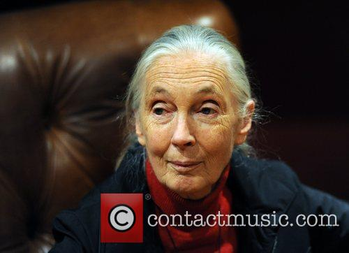 Jane Goodall Hope 4 Apes held at the...
